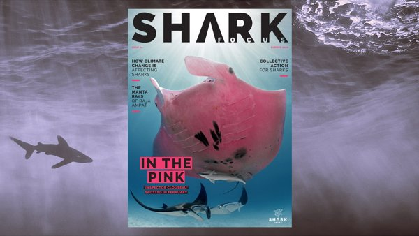 Shark Focus Magazine (Issue 64) – Out Now!