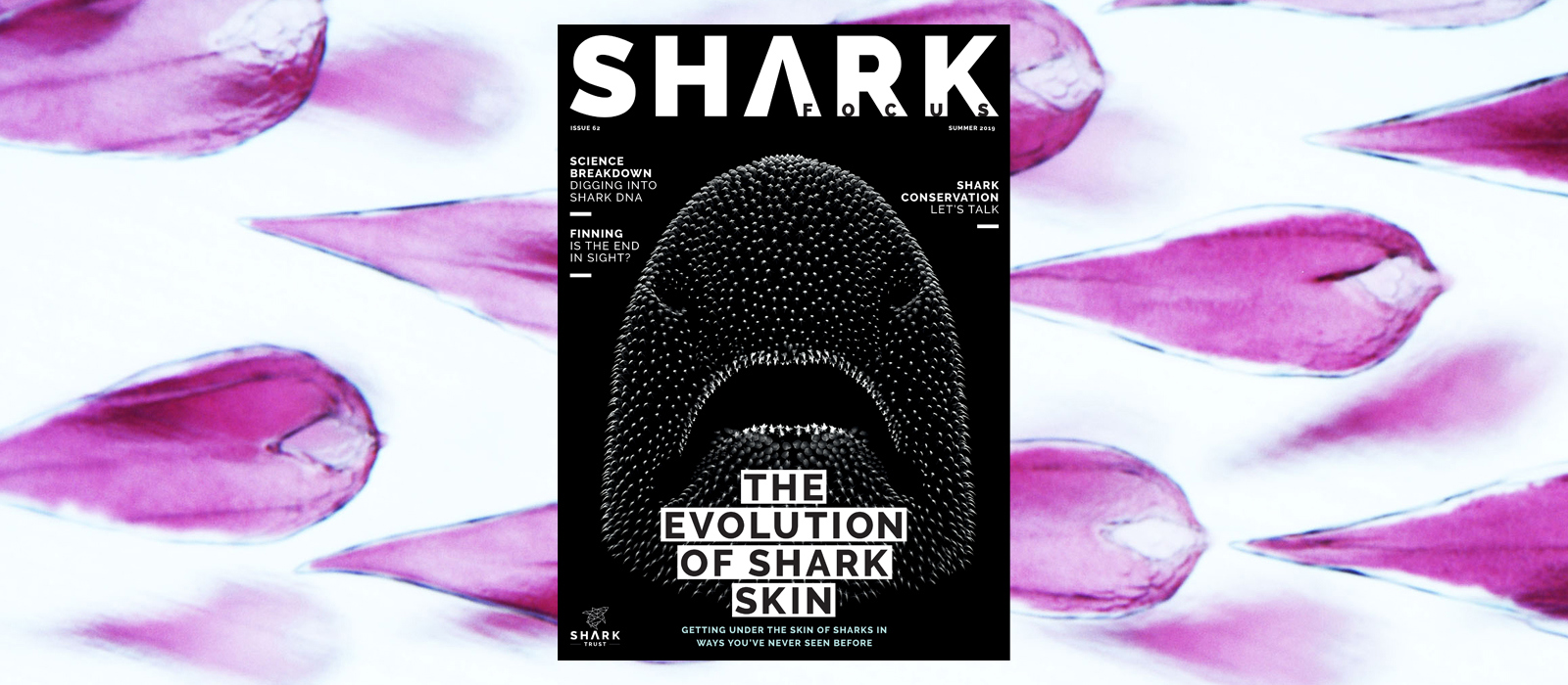 Shark Focus Magazine (Issue 62) – Out Now!