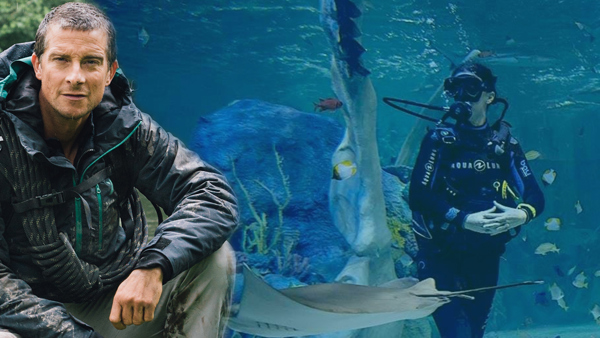 Meet Bear Grylls and Dive with Sharks