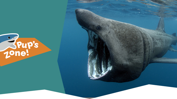 Basking Shark Project